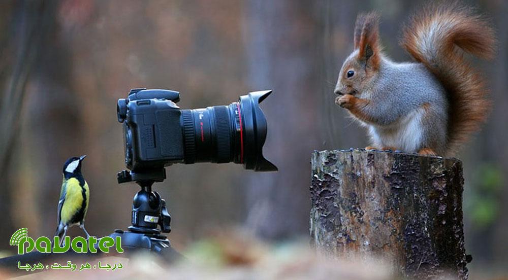 انتخاب سوژه در عکاسی