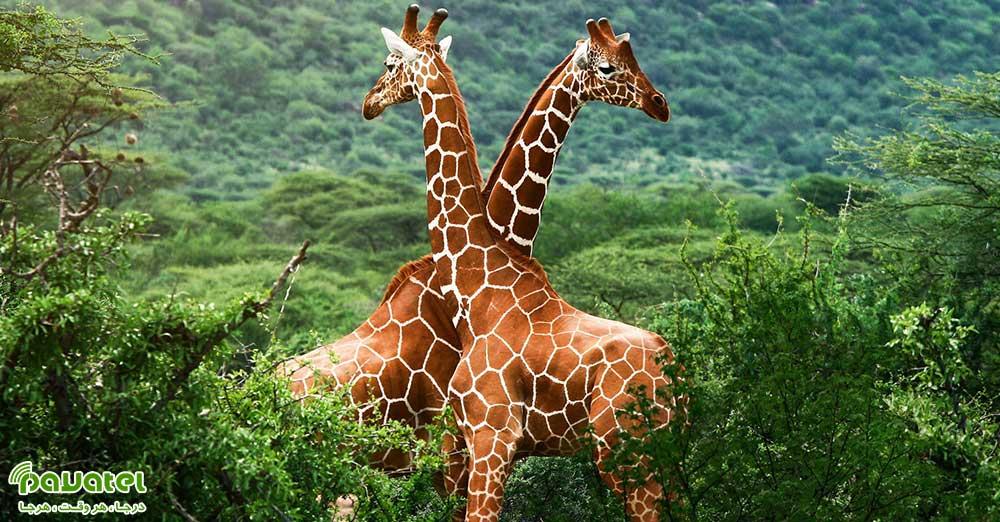 عکاسی از حیوانات در طبیعت