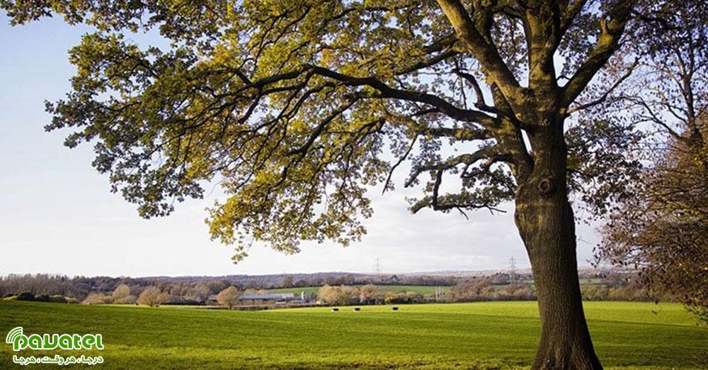 عکاسی از درختان