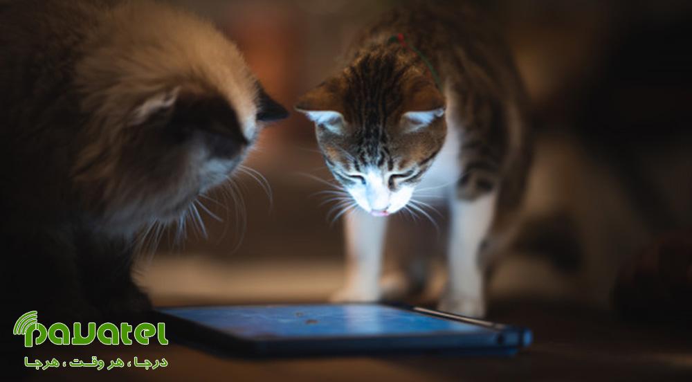 بهترین بازی های اندروید مخصوص گربه ها